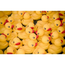 Ducks (12-set)